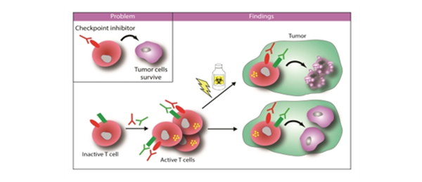 Quadruple therapy improves anti-tumor immunity
